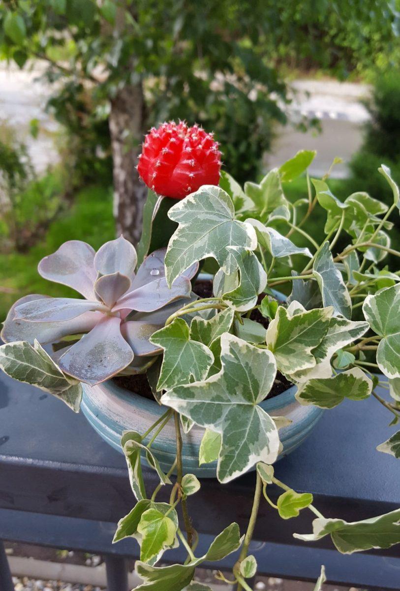 colivie cu plante naturale